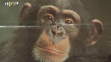 RTL Nieuws Protest tegen proef-apen MSD