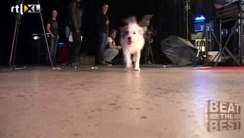 Beat The Best Backstage met Florin en Cato