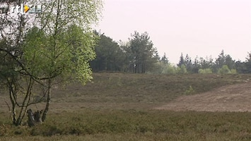 RTL Nieuws Onze natuur staat droog