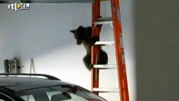 RTL Nieuws Schattig: moederbeer redt baby uit garage