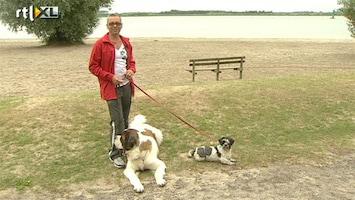RTL Nieuws 'Giftig' strand Zeewolde blijft een raadsel