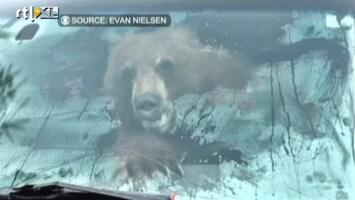 Editie NL Bizar: een beer in je auto