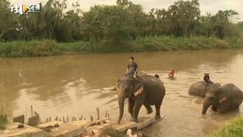 RTL Nieuws Koffie uit olifantenpoep 'verrassend' en minder bitter