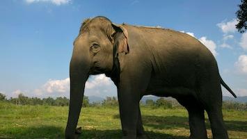 RTL Nieuws Dolgedraaide olifant valt dorp aan