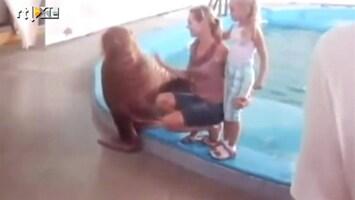 Editie NL Walrus geilt op blondine