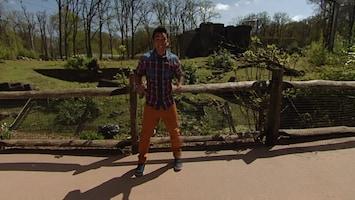 Burgers' Zoo En Waarom - Jari En De Cheeta