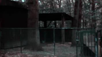 Jungle Club - Afl. 46