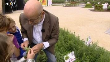 Green-kids - Floriade Koken