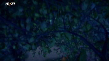 Sprookjesboom - De Raadsheer