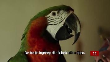 De Vijftien Vetste Video's Van Vandaag - Afl. 49