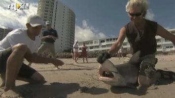 RTL Nieuws Op haaienjacht voor vaccin tegen haaienbeet