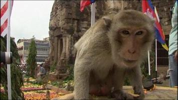 RTL Nieuws Apen krijgen groot fruitbuffet in Thailand
