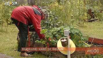 RTL Nieuws Urban farming floreert door crisis