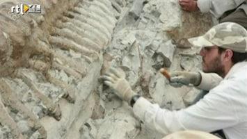 RTL Nieuws Complete dinostaart opgegraven in Mexico