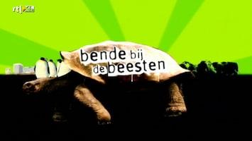 Bende Bij De Beesten - Afl. 1