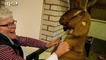 RTL Nieuws Kinderboerderij is sociale ontmoetingsplek