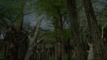 Sprookjesboom Huilen naar de maan