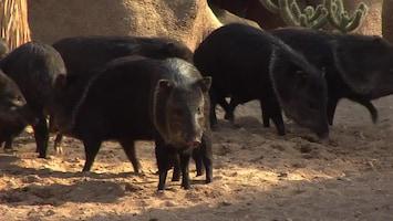 Uitgelicht - Afl. 33: Burgersâ' Zoo