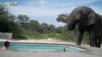 Editie NL Olifant slurpt zwembad leeg