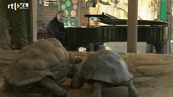 RTL Nieuws Pianist stimuleert liefdesleven reuzenschildpadden
