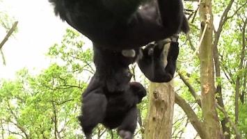 Uitgelicht - Afl. 16: Burgersâ' Zoo