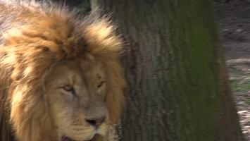 Uitgelicht - Afl. 11: Burgersâ' Zoo