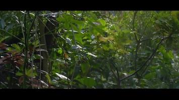 Burgers' Zoo Natuurlijk Vleerhond