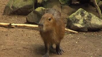 Uitgelicht - Afl. 20: Burgersâ' Zoo