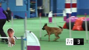 FikkieTV Afl. 11