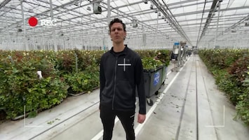 Ondernemen coronacrisis mkb hulp sierteelt bloemen shredder