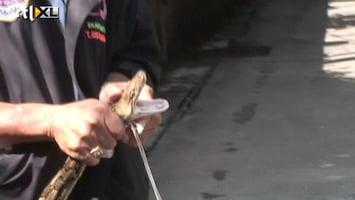 RTL Nieuws Bangkok: na het water de slangen