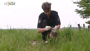 RTL Nieuws Roofvogels gedood in Friesland
