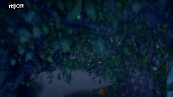 Sprookjesboom - Verrassing