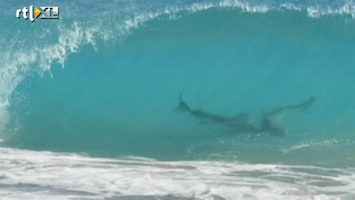 RTL Nieuws Tienduizenden haaien voor de kust van Florida