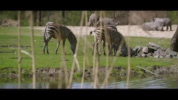 Burgers' Zoo Natuurlijk - Grantzebra?s