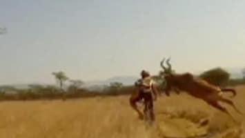 RTL Nieuws Antilope ramt mountainbiker