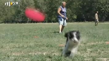 RTL Nieuws Kampioenschap hondenfrisbee groot succes