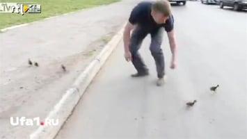 Editie NL Man redt eendjes van dood op snelweg