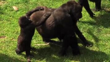Uitgelicht - Afl. 7: Burgersâ' Zoo