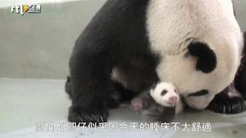 Editie NL Panda eet jong haast op van vreugde