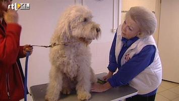 RTL Nieuws Hond gewassen door koningin Beatrix